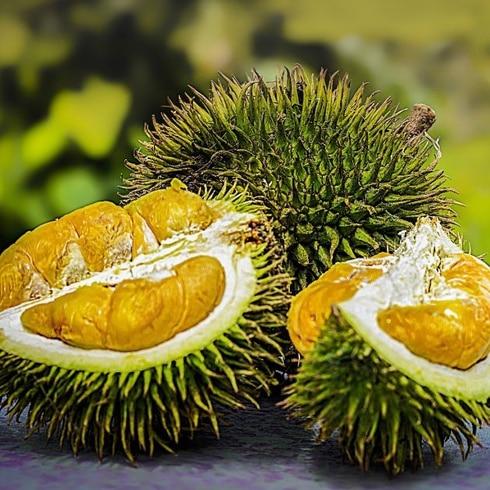 Es boricua, vive en China y descubrió una fruta apestosa
