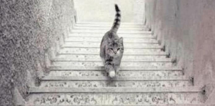 Ahora, la imagen de la discordia tiene que ver un minino que algunos ven subir una escalera, mientras que otros, lo ven bajándolas. (facebook.com/9gag)