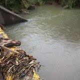 Investigan dos incidentes de personas afectadas por golpes de agua en El Yunque