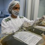 Investigadores desarrollan un suero contra COVID-19 a través del plasma de caballos