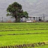 Invitan a empresas del sector agrícola a aprovechar subvenciones disponibles