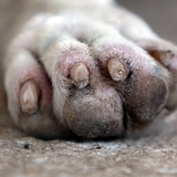 Hieren a un perro en Yauco