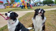 Apertura del parque para mascotas de Arecibo.
