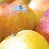 Los mangos de Crucita