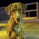 Perro rescatado en alta mar será adoptado por su salvador