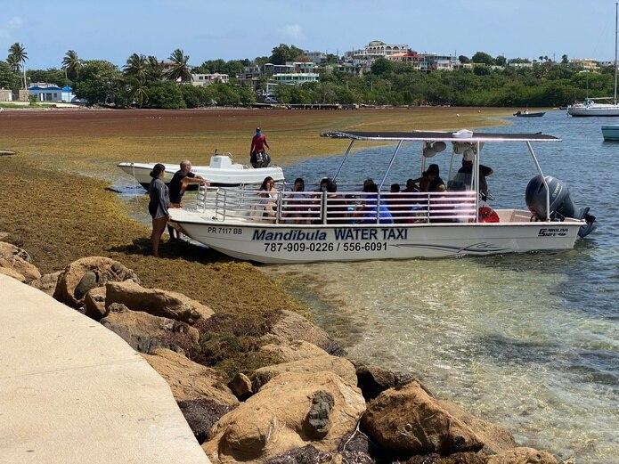 La compañía de Mandíbula Water Taxi tuvo que mover el lugar de recogido de sus pasajeros porque el muelle de madera que usan estaba cubierto de sargazo en Las Croabas de Fajardo.